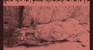 Siculicidium - Hosszú út az örökkévalóságba video premier